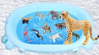 Animals for Children - Learn Wild Animal Names | Toys for Kids | Lum Sum Kids