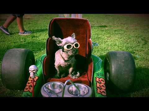 Howl-o-ween costume parade 2017
