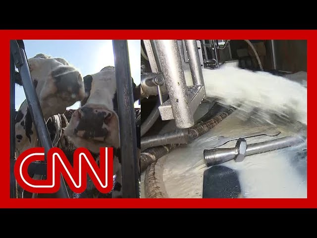 Why a farmer is dumping 12,000 gallons of milk a day