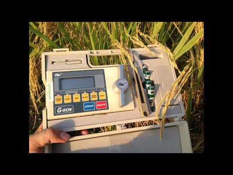 สุ่มวัด ผลผลิตข้าว พื้นที่ 1 ตารางเมตร