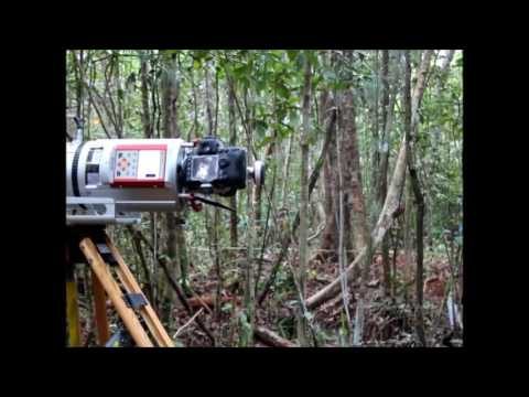 WUR-CIFOR Indonesia T-LIDAR scan before & after selective logging in Tropical Forest