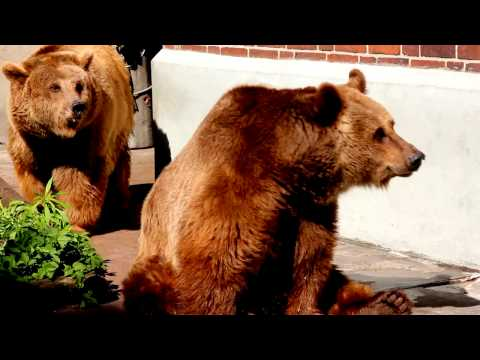 El oso Berlinés | Reportaje 2011