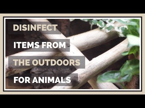 How to Disinfect Sticks, Logs & Soil for Animal Enclosures