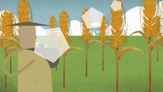Wheat Rust, the Cereal Killer - An Animation from The John Innes Centre