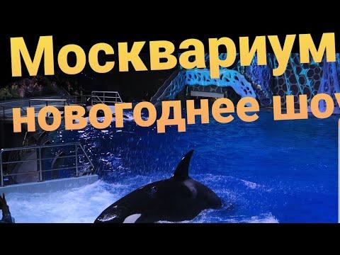 ✅Как мы в Москвариум сгоняли.Новогоднее представление. #москвариум #достопримечательностимосквы
