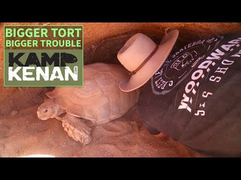 The Truth About Sulcata Tortoises
