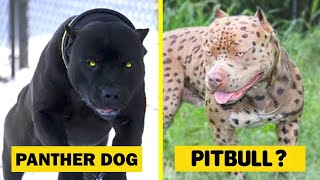 15 Rarest Dog Breeds In The World