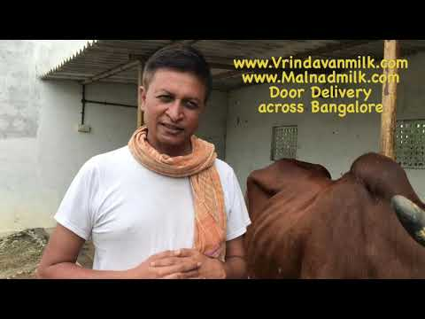 A2 milk available in bangalore, Software to Dairy farming,Popular desi cows - part 1