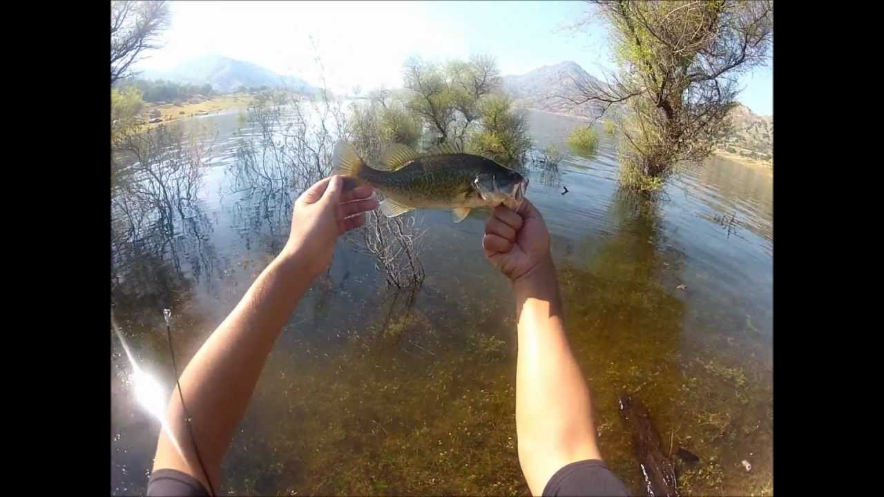 Bass fishing lake kaweah youtube for Lake kaweah fishing