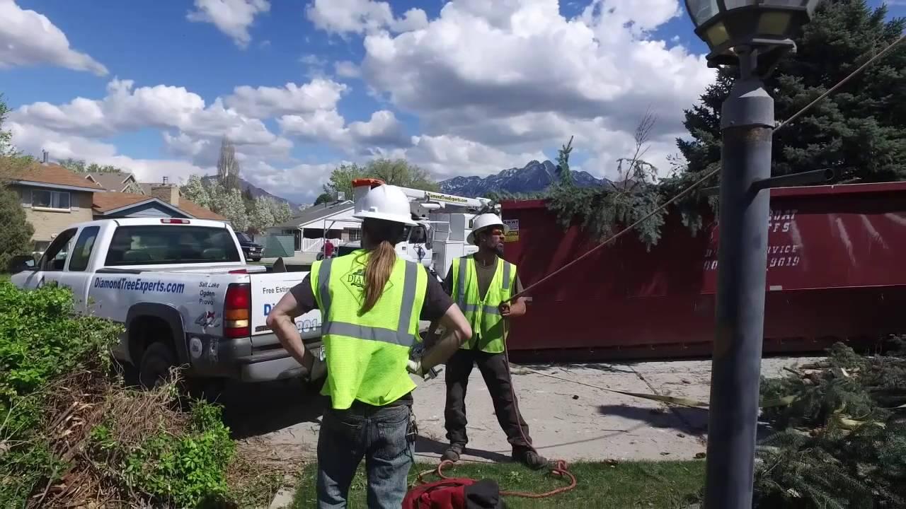 Diamond Tree Experts Removal Utah Salt Lake City Emergency Service