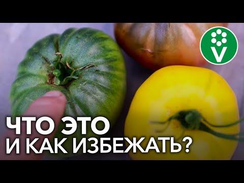 ЖЕЛТЫЕ ПЛЕЧИКИ ТОМАТОВ. Почему помидоры созревают неравномерно?