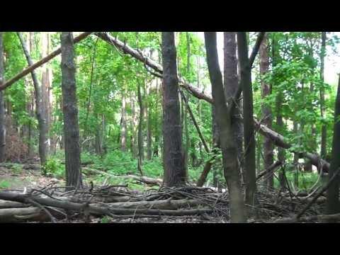 Schenectady Central Park Woods Bradley Blvd