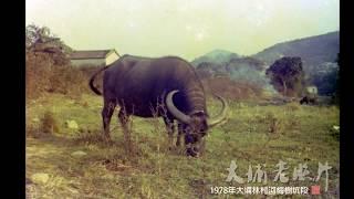 Publication Date: 2020-02-12 | Video Title: 大埔老照片回顧(9) Tai Po Old Photo Re