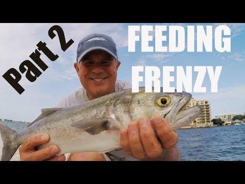 Catching Ladyfish, Bluefish And Jacks During Feeding Frenzy (PART 2)
