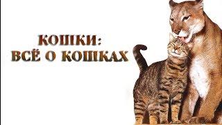 Кошки. Все о кошках(Кошки, Все о кошках, Кошки видео, Про кошек, Какие кошки, Смотреть кошек, Почему кошка, Сколько кошка., 2015-12-22T07:55:17.000Z)
