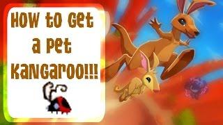 Animal Jam : How to get a pet Kangaroo!