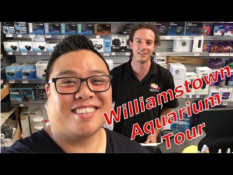 FTRTV - Fish Store Tour at Williamstown Aquarium