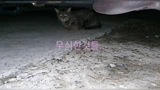아파트 주민들의 횡포로 쫒겨나는 불쌍한 길고양이들밥자리