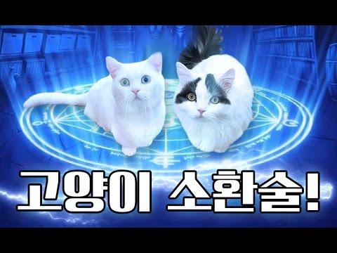 고양이 소환술!