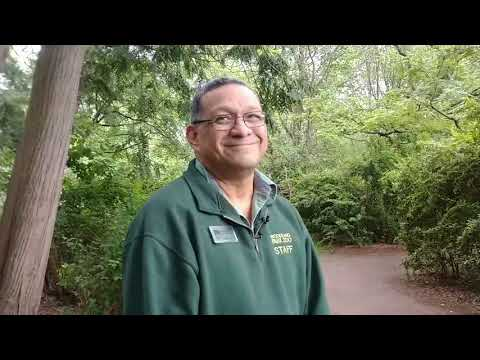 Meet Hasani The New Baby Giraffe At Seattle's Woodland Park Zoo 5-16-2019