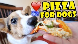 CORGI Trying Homemade Pizza (Dog-Friendly Gourmet) || Life After College: Ep. 595