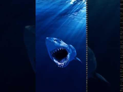 [samsung Theme- Video Wallpaper] The Shark