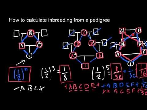 How to calculate inbreeding from a pedigree chart