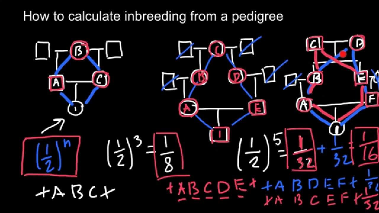 How to calculate inbreeding from a pedigree chart  YouTube