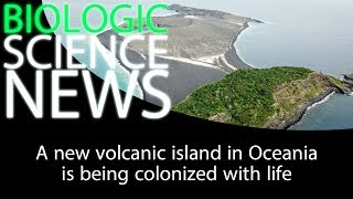 Science News - A new volcanic island in Oceania is being colonized with life