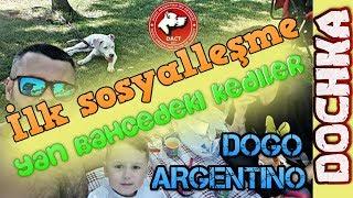 DOGO ARGENTINO   DOCHKA SOSYALLEŞME   YAN BAHÇEDEKİ KEDİLER   DOÇKA
