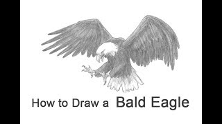 How to Draw a Bald Eagle (Flying / Hunting)