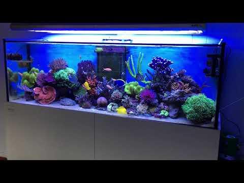 Rehder the reefbuilders 130g reef tank