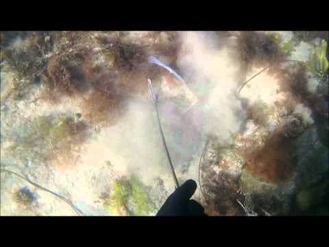 Spearfishing North East England