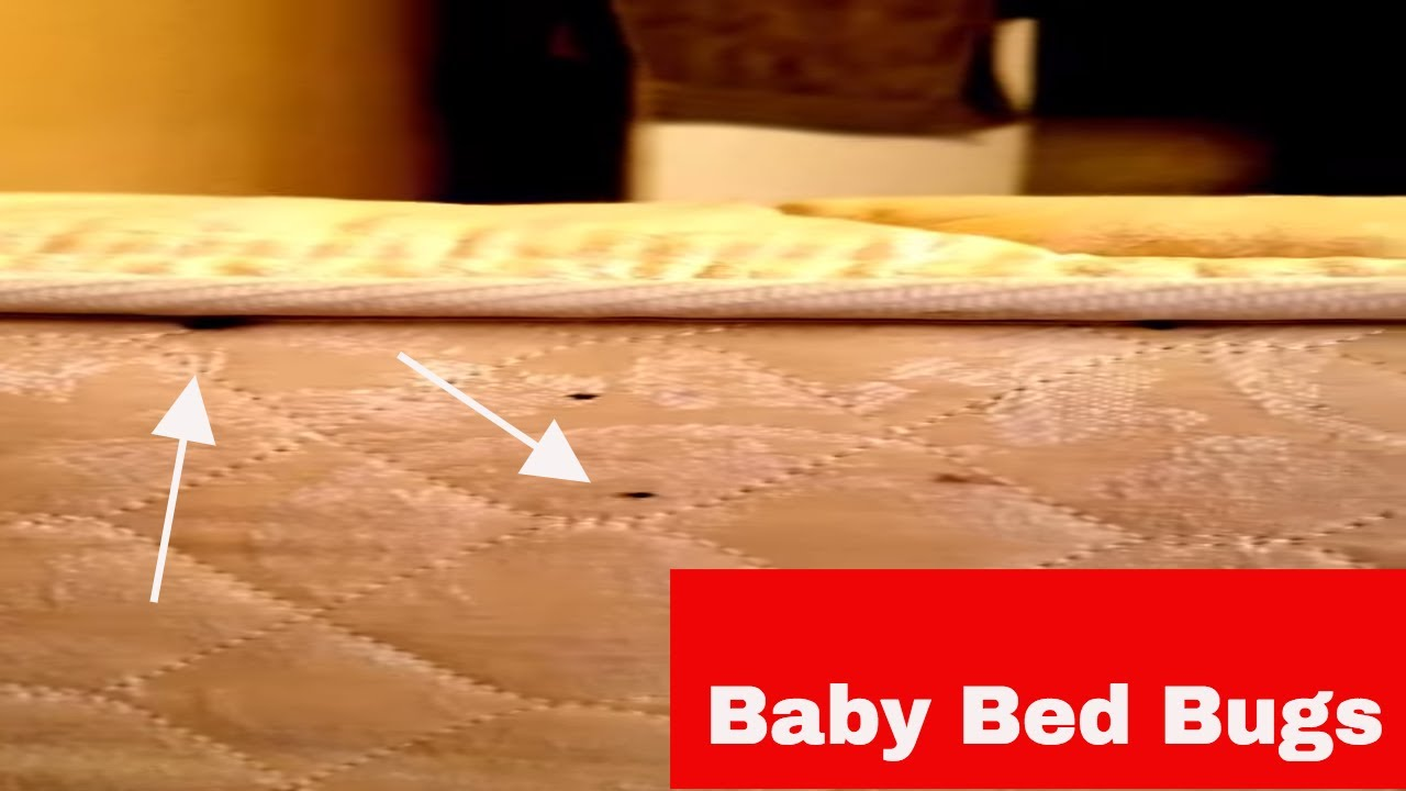 Baby Bed Bugs Moving Youtube