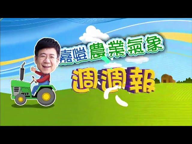 2020.11.23─嘉愷農業氣象週週報