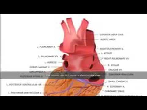 Human Anatomy and physiology : Learn All About The Human Body