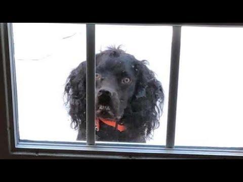 Собаку посадили за дверью за 19 ноября