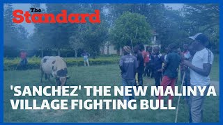 Police fire teargas to try and stop Sanchez\'s first bull fight from taking place at Malinya Stadium