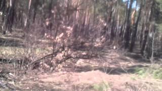 Катаюсь по лесу около Лесного кладбища, снимаю на мобилку