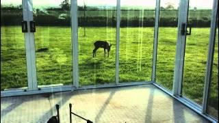 Стеклянная терраса - визит на рассвете(, 2014-07-14T18:46:06.000Z)