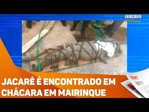 Jacaré é encontrado em chácara em Mairinque - TV SOROCABA/SBT