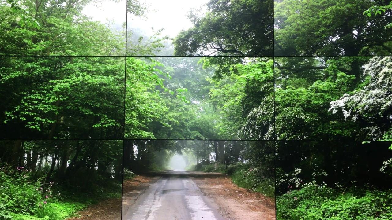Image result for david hockney the four seasons