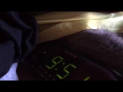 Cat tries to turn off alarm clock.