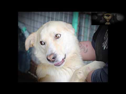 Die Hunde des Phoenix-Shelter