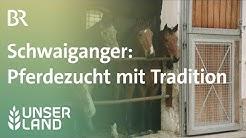 Schwaiganger: Pferdezucht seit 1.000 Jahren | Unser Land | BR Fernsehen