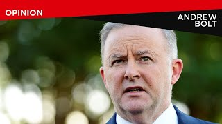 Labor leadership is a job for Albanese: Bolt
