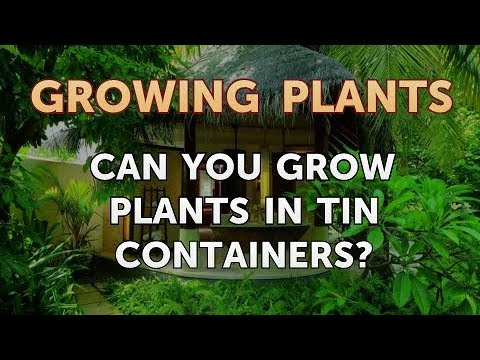 Can You Grow Plants In Tin Containers?