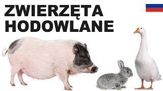 Yрок польского языка - Cельскохозяйственные животные 2 (Zwierzęta hodowlane)