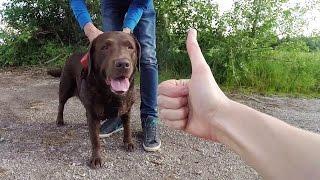 VLOG Где мы гуляем с собакой в Любляне / Жизнь в Словении
