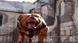 Dark Dynasty K9's 2013 Protection Dogs Elite Dog Training